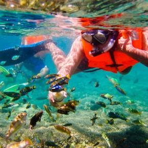 Snorkeling Gili-Nanggu