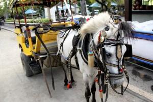 Horse cart in Gili Trawangan - Lombok