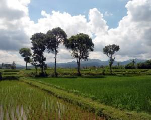 Ricefield view - Lombok Biking