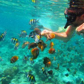 snorkeling to gili meno