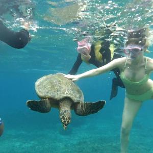 snorkeling with turtle gili trawangan
