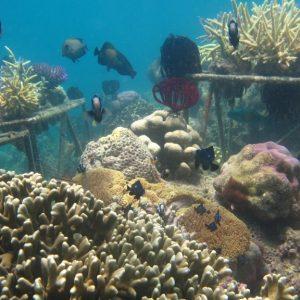 nanggu coral